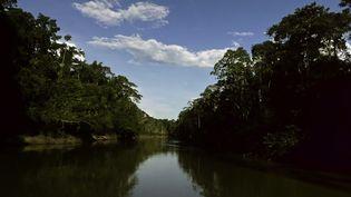 La jungle dans le parc Yasuni, en Equateur, le 9 novembre 2012. (PABLO COZZAGLIO / AFP)