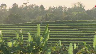 Série d'Asie : lesinnombrablesrichesses du bambou  (France 2)