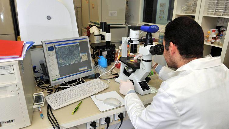 Un chercheur observe au microscope des cellules souches embryonnaires, le 29 janvier 2010, à l'Institut des cellules souches pour le traitement et l'étude des maladies monogénétiques (Istem), à Evry (Essonne). ( MAXPPP)