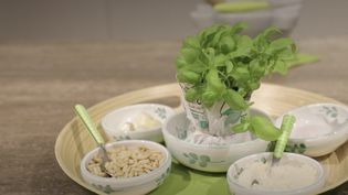 Chaque jour cette semaine, le 13 Heures se penche sur des spécialités culinaires venues d'ailleurs. Mercredi 25 novembre, ilvous emmène en Italie pour découvrir les secrets de la fabrication du pesto. (France 2)
