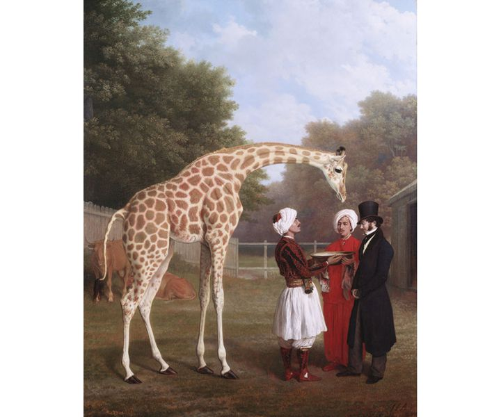 """Jacques-Laurent Agasse, """"Girafe nubienne"""", 1827, Londres, The Royal Collection Trust (Photo : © Royal Collection Trust / © Her Majesty Queen Elizabeth II 2020)"""