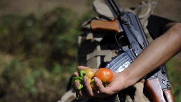 Dans la région de Lattaquié, en Syrie, en septembre 2013. Ici, des hommes en armes cultivent la terre pour nourrir leurs proches. (Atilgan Agence Ozdil / Anadolu)
