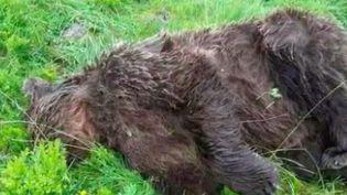 Des associations proposent des récompenses pour lutter contre le braconnage. Elles espèrent ainsi retrouver les tueurs d'animaux protégés, comme les lynx ou les ours. (France 2)