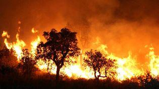 Photo d'illustration d'un incendie en Algérie, le 1er septembre 2007. (STR / AFP)