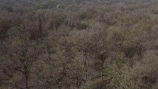 Italie : le bois de Trino, forêt ancestrale au milieu des rizières (France 3)