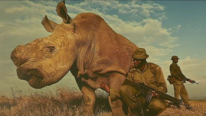 (Brent Stirton / Culturebox - Capture d'écran)