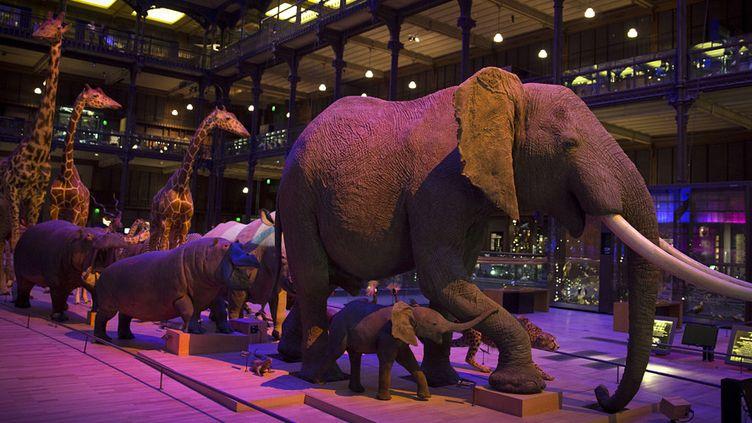 La Grande Galerie de l'Evolution au Muséum national d'Histoire naturelle  (JOEL SAGET / AFP)
