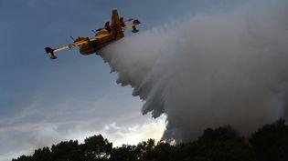 Un avion bombardier d'eau de la Sécurité civile, au-dessus de la forêt de Chiberta, à Anglet (Pyrénées-Atlantiques), le 30 juillet 2020. (GAIZKA IROZ / AFP)
