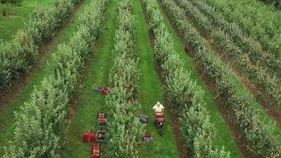 Peu de jeunes acceptent de nos jours de reprendre une exploitation agricole. Reportage. (CAPTURE D'ÉCRAN FRANCE 2)