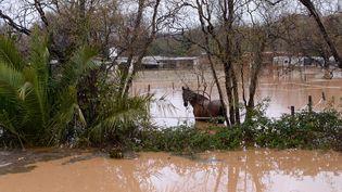 Un cheval pris par les eaux après les fortes pluies dans le Sud-Est, le 19 janvier 2014. (ANNE-CHRISTINE POUJOULAT / AFP)
