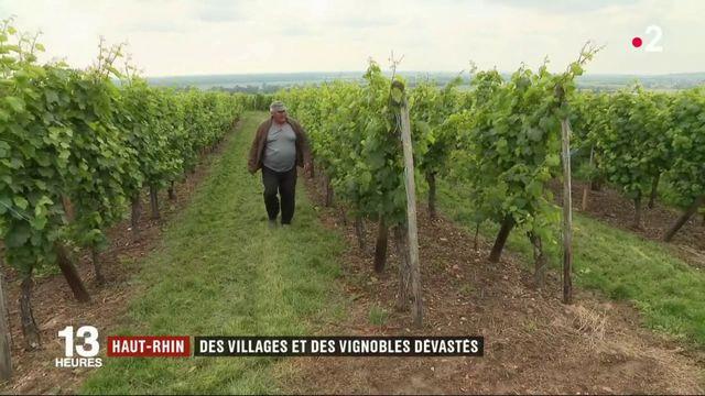 Intempéries : des vignobles alsaciens dévastés par la grêle et les inondations