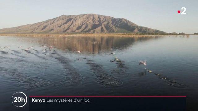 Kenya : le niveau du lac Natron a rarement été aussi élevé