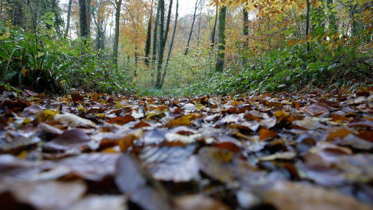 La forêt deRetz (Aisne),où a été retrouvé le corps d'Elisa Pilarski. (PHILIPPE DE POULPIQUET / PHOTOPQR/LE PARISIEN/MAXPPP)