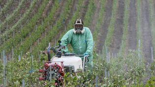 Un viticulteur traite ses champs de vignes, le 15 mai 2009. (  MAXPPP)