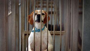 Un chien patiente dans une cage de la SPA de Gennevilliers en 2007. Image d'illustration. (MARTIN BUREAU / AFP)