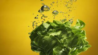 Attention aux salades en sachet...Elles peuvent être porteuses de la salmonelle (Henrik Sorensen / GETTY IMAGES)