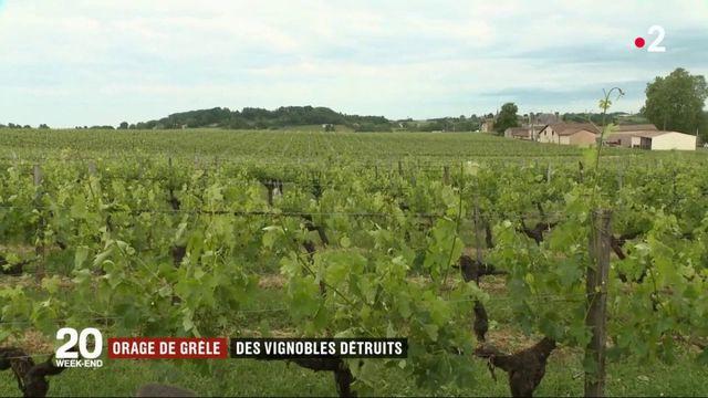 Météo : la grêle a endommagé les vignobles bordelais
