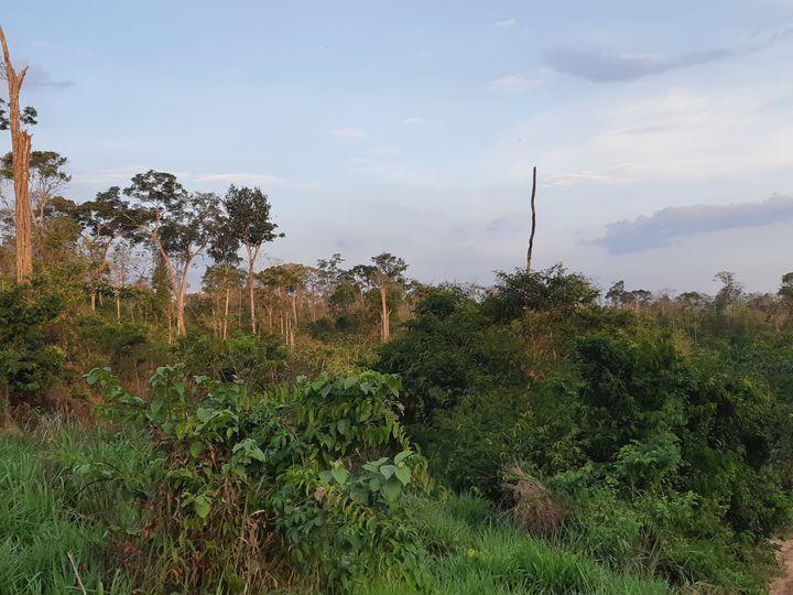 La forêt des Guajajara, dans l'Etat de Maranhão(Brésil), en novembre 2019 (ETIENNE MONIN / FRANCEINFO / RADIO FRANCE)