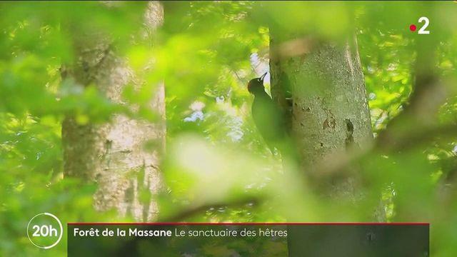 Pyrénées-Orientales : à la découverte de la forêt de la Massane
