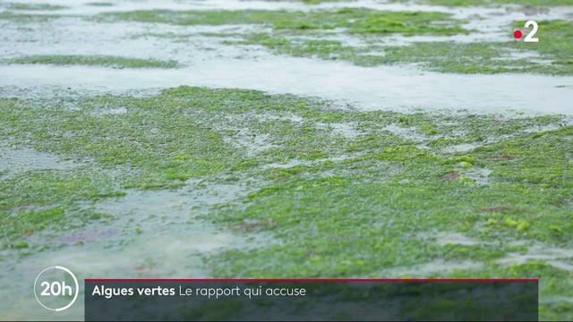 Écologie : le fléau des algues vertes