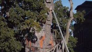 À Allouville-Bellefosse (Seine-Maritime), un chêne millénaire faiT la fierté des habitants. Reportage. (FRANCE 3)