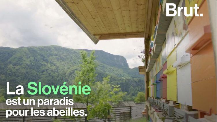 VIDEO. La Slovénie, un paradis pour les abeilles ? (BRUT)