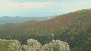 Dans un paysage vallonné avec 400 km de pistes de randonnée, la route des Crêtes est une expérience incontournable dans les Vosges. (FRANCE 2)