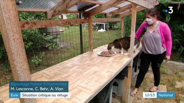 Eure : des refuges pour animaux submergés