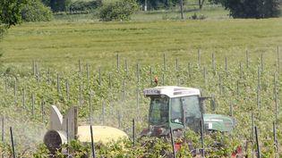 Un viticulteur traite ses vignes avec des produits phytosanitaires, le 24 mai 2016. (Photo d'illustration) (MAXPPP)