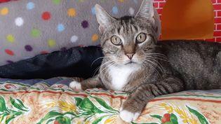 Un chat à la SPA de Velaine-en-Haye. (Illustration). (ISABELLE BAUDRILLER / FRANCE-BLEU SUD LORRAINE)