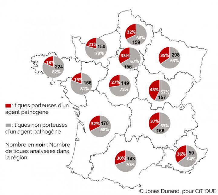 Pourcentage de tiques piqueuses d'humain porteuses de pathogènes en France. (JONAS DURAND POUR CiTIQUE - 2021)
