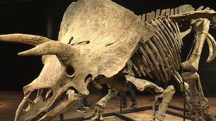 """Vendu au prix initial d'1 million d'euros, """"Big John"""" est la star du jeudi 21 octobre, à Paris. Mais seulement une poignée d'individus pourront tenter d'acquérir le fossile, vieux de 66 millions d'années. (CAPTURE ECRAN FRANCE 3)"""