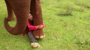 Capture d'écran d'un reportage de France 2 sur une Thaïlandaise recueillant des éléphants maltraités. (FRANCE 2)