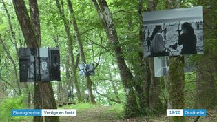 Des moments de vie immortalisés au Portugal, suspendus dans la forêt de Puysségur. (France 3 Occitanie)