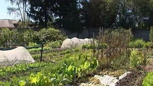 Jardiniers et maraîchers près d'Orléans, àFleury-les-Aubrais (Loiret), le 21 août 2014. (ELSA CADIER ET FRANCOISE SYLVIE - FRANCE 3 CENTRE)