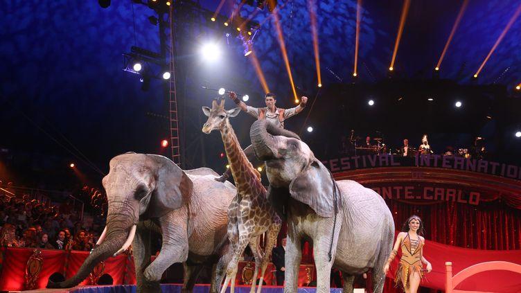 Des éléphants et une girafe, lors du Festival du cirque de Monte-Carlo, le 23 janvier 2018. (MAXPPP)