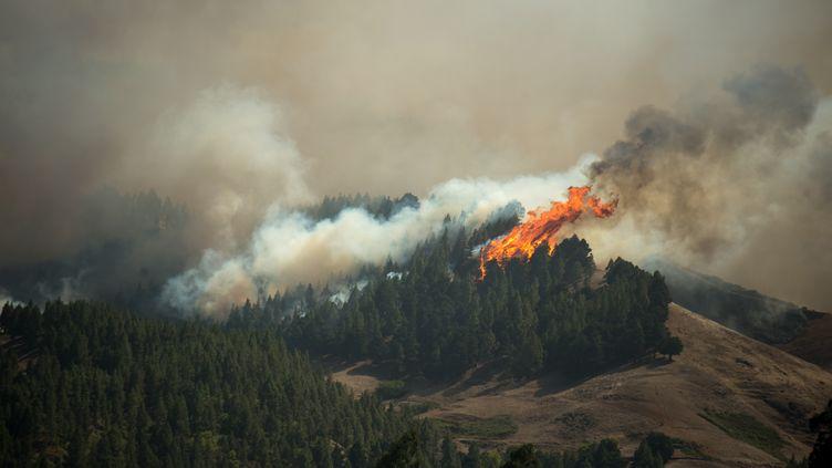 Un important incendietouche le parc naturel de Tamadaha, sur l'île espagnole de Grande Canarie, le 18 août 2019. (DESIREE MARTIN / AFP)