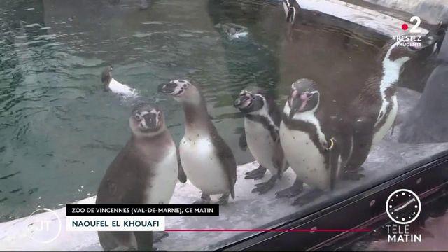 Déconfinement: le zoo de Vincennes a rouvert