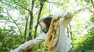 Un apiculteur en Lozère, le 20 juillet 2019. (PAULO AMORIM / NURPHOTO / AFP)