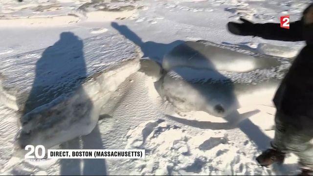 États-Unis : froid polaire dans l'est du pays
