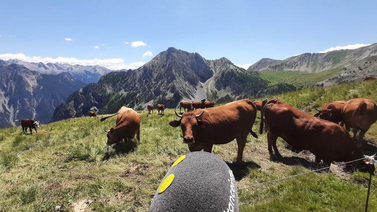 Près du refuge de Furfande dans les Hautes-Alpes. (VALENTIN DUNATE / RADIO FRANCE)