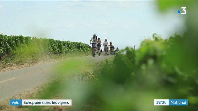 Tourisme : échappée à vélo dans les vignes de la côte de Beaune