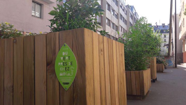 """L'opération""""Du vert près de chez vous"""" a inspiré le projet de bacs à fleurs dans le 11e arrondissement de Paris (RADIO FRANCE / JULIA BLANCHETON)"""