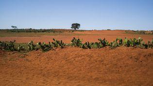 Amboasary-Atsimo dans le sud de Madagascar, le 3 septembre 2021. (RIJASOLO/AFP)