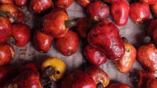 Une équipe de France 2 s'est rendue au Pérou, au cœur de la forêt amazonienne, au marché des sorciers de Belén, un lieu réputé pour soigner tous les maux, grâce aux plantes utilisées par les guérisseurs. (FRANCE 2)