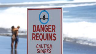 Un panneau met en garde contre la présence de requins sur une plage d'Etang-Sale, sur l'île de la Réunion, le 27 octobre 2013. (RICHARD BOUHET / AFP)