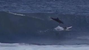 Capture d'écran d'une vidéo montrant un dauphin percuter un surfeur, en Australie. (STAB / VIMEO)
