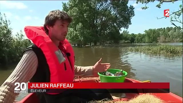 Inondations : des éleveurs forcés de ravitailler leurs troupeaux en barque