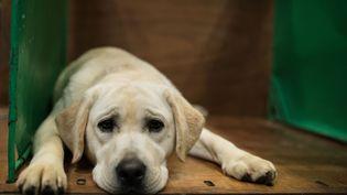 """La SPA de Mulhouse a porté plainte pour """"acte de cruauté ayant entraîné la mort d'un animal de compagnie"""" (photo d'illustration). (OLI SCARFF / AFP)"""