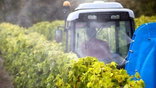 Un viticulteur traite ses vignes à Jurignac (Charente), le 15 juillet 2020 (illustration). (AFP / PHILIPPE ROY)